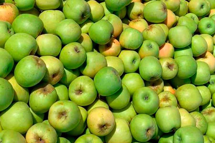 muchas manzanas