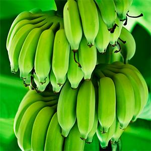 Mas plátanos por cultivo
